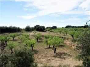 Terreno en Carretera Cregenzan