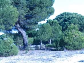 Terreno en Polígono los Burros, nº 10