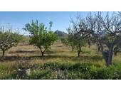 Terreno en venta en Miraflores, Jumilla por 50.000 €